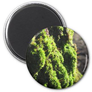 Imã O musgo verde no detalhe da natureza de musgo
