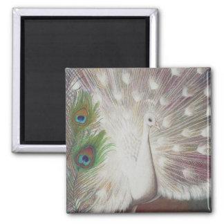 Imã O pavão branco e a arte verde da pena do pavão