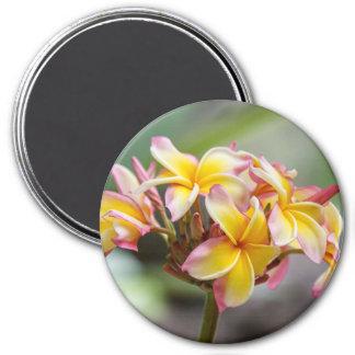 Imã O Plumeria cor-de-rosa amarelo de Havaí floresce o