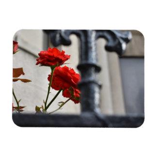 Ímã O vermelho floresce a fotografia da Nova Iorque do