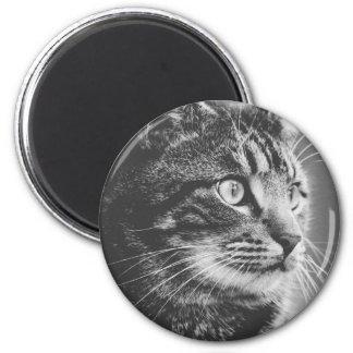Imã Olhos grandes do perfil | do gato malhado | preto