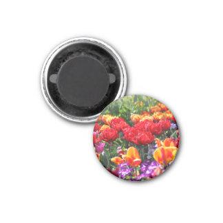 Imã Ondas florais dos carmesins de Falln