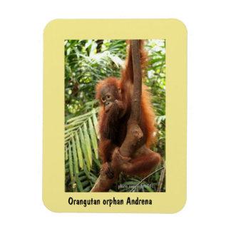 Ímã Órfão do orangotango de Bornéu: Salvar animais
