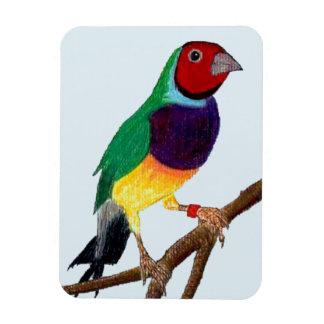 Ímã ~ original da arte do ~ do passarinho de Gouldian