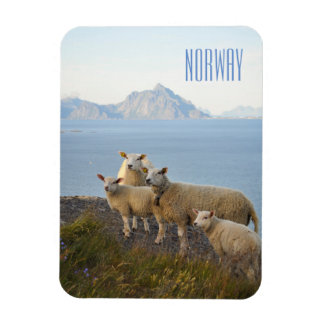 Ímã Os carneiros de Noruega na parte superior da