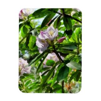 Ímã Os rododendros estão na flor