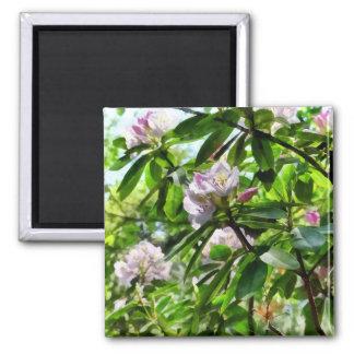 Imã Os rododendros estão na flor