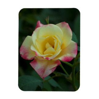 Ímã Os rosas significam o amor!