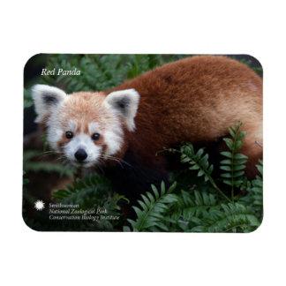 Ímã Panda vermelha de Smithsonian |