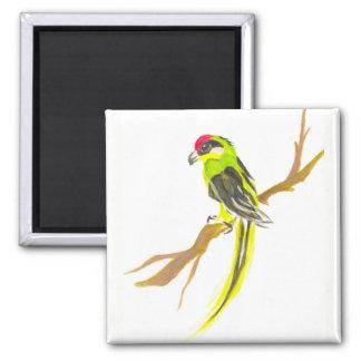 Imã Papagaio em um ramo. Pintura da aguarela