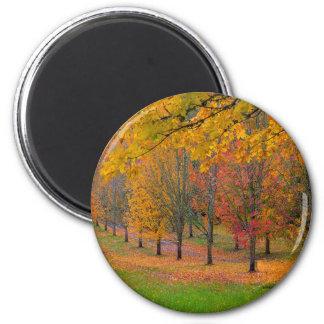 Imã Parque com as árvores de bordo alinhadas árvore no
