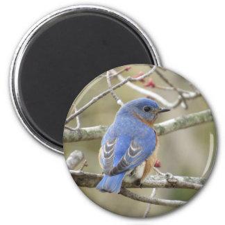 Imã Parte traseira do Bluebird