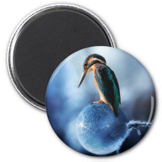 Imã Pássaro do zumbido no tiro congelado do macro da