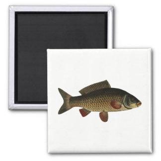 Imã Peixes