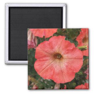 Imã Petúnia cor-de-rosa