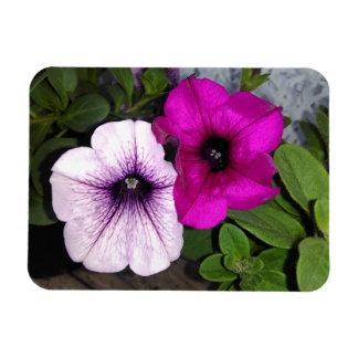 Ímã Petúnia cor-de-rosa e roxo