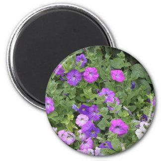 Imã Petúnia roxo do tema do jardim do primavera das