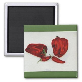 Imã Pimenta vermelha - imagem do vintage
