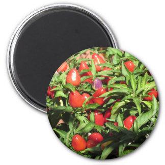 Imã Pimentas de pimentão vermelho que penduram na