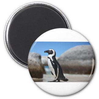 Imã Pinguim africano