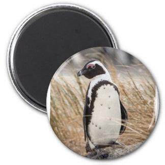 Imã Pinguim africano na praia