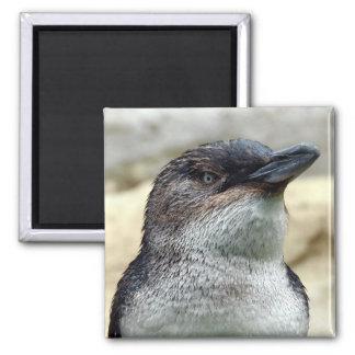 Imã Pinguim pequeno