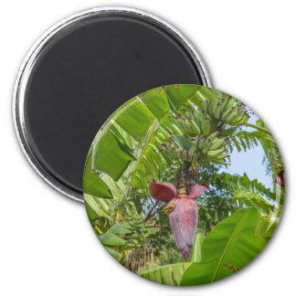 Imã Plantação de banana na ilha macilento de Sok Kwu