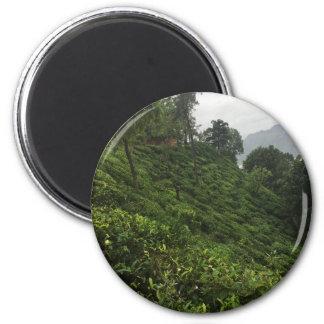 Imã Plantação de chá