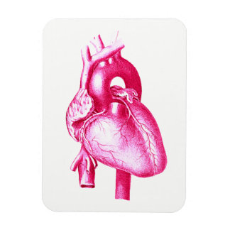 Ímã Pop art da cardiologia: Anatomia humana