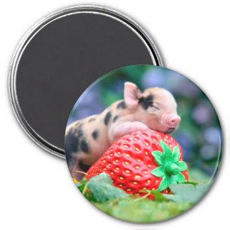Imã porco da morango