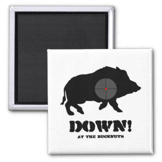 Ímã - porco preto para baixo! , No Bucknuts Ímã Quadrado