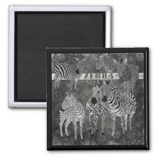 Ímã preto & branco das zebras ímã quadrado