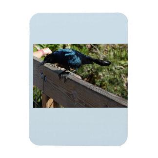 Ímã preto da foto do pássaro