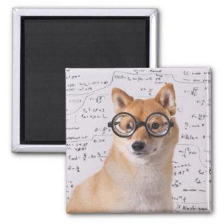 Imã Professor Barkley ímã do quadrado de 2 polegadas