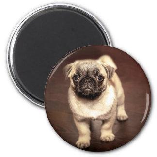Imã Pug bonito do filhote de cachorro, cão, animal de