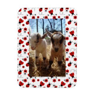 Ímã Quadro floral vermelho da foto do aniversário da
