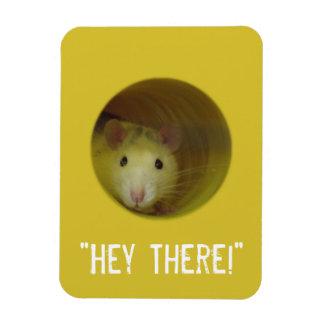 Ímã Rato bonito no animal engraçado do furo