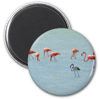 Imã Rebanho cinzento e cor-de-rosa dos flamingos no
