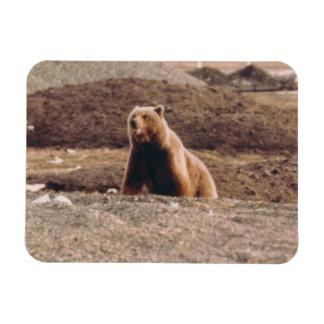 Ímã Refrigerador do ártico da porca do urso da tundra