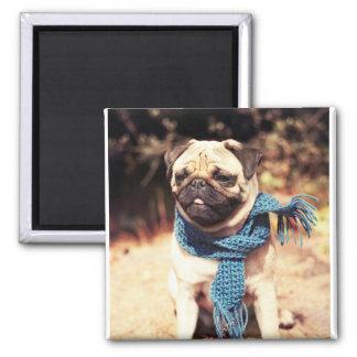 Imã Retrato bonito do cão do Pug com lenço azul
