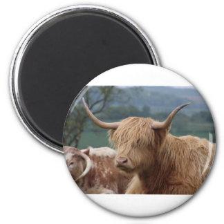Imã retrato do gado das montanhas