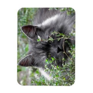 Ímã Retrato do gato do Siberian |