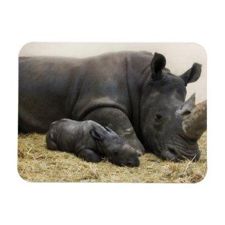 Ímã Rinoceronte do branco do bebê do jardim zoológico
