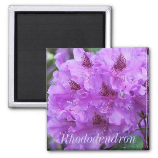 Imã Rododendros roxos bonitos florais