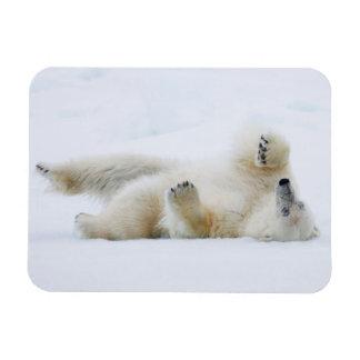 Ímã Rolamento do urso polar na neve, Noruega