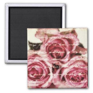 Imã Rosas cor-de-rosa do vintage