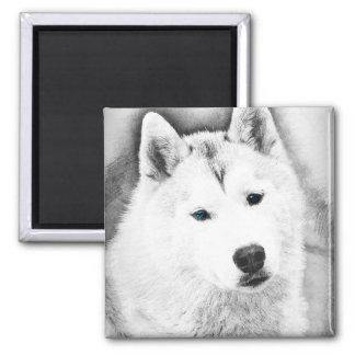 Imã Rouco Siberian branco com esboço das belas artes