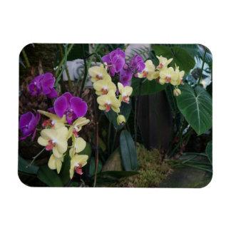 Ímã roxo e amarelo da foto das orquídeas