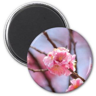Imã Sakura