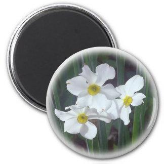 Imã seleções florais do médio-primavera